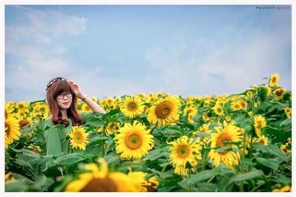 hoa-huong-duong-nghe-an-pys-travel001