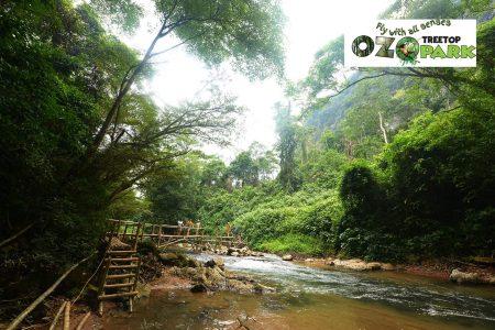 Tour động Thiên Đường - Ozo Treetop Park