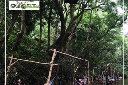 Tour Đồng Hới - Ozo Treetop Park 1 ngày
