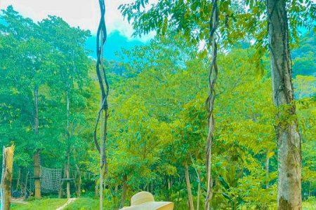 Về Quảng Bình khám phá rừng nguyên sinh và trò chơi trên cây tại Công viên Ozo